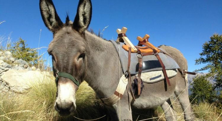 Ponpon, ou l'âne randonneur avec lequel nous nous sommes baladés